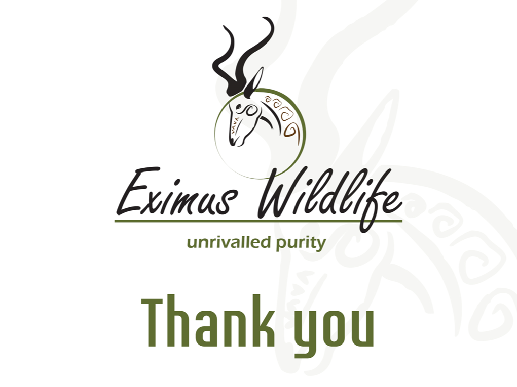 Peri Peri creative - Eximus wildlife Powerpoint template3